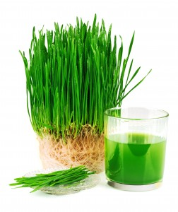 Wheatgrass juice with sprouted wheat on the plate isolated on white background